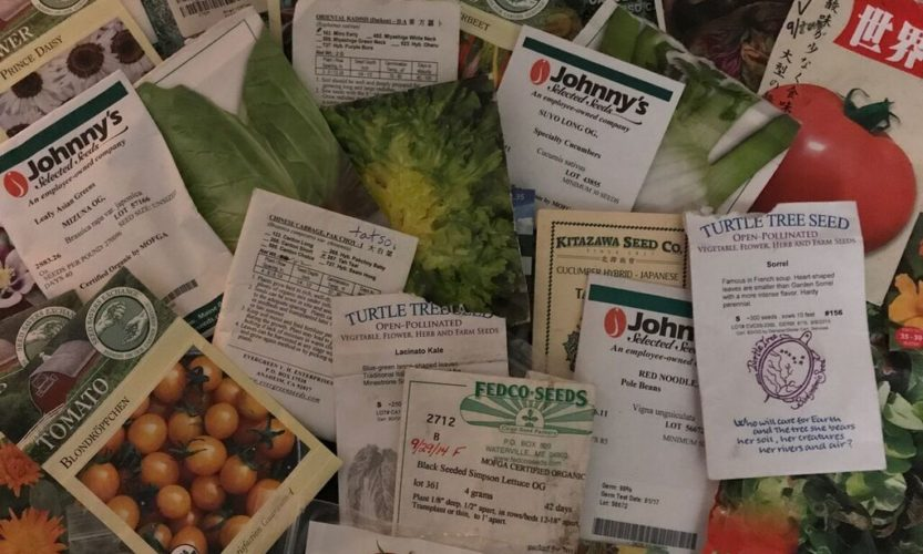 Seed companies Archives • South Florida Gardening