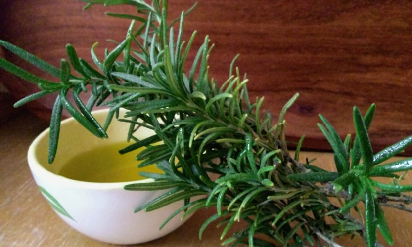 Rosemary sprig with cup of olive oil