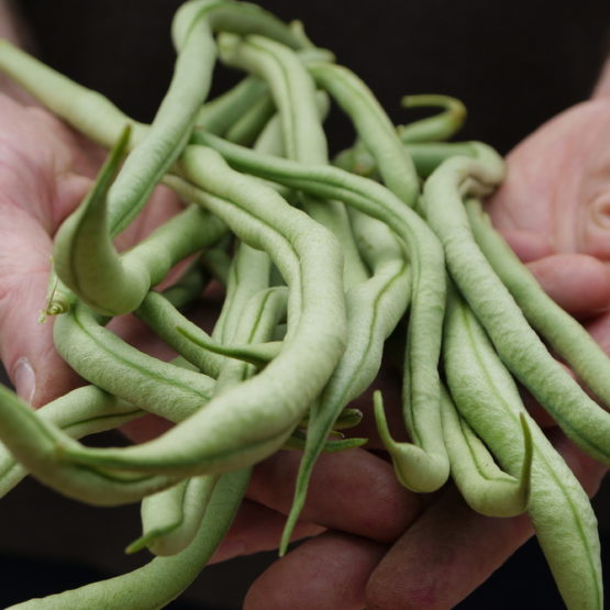 Fresh green beans in hands