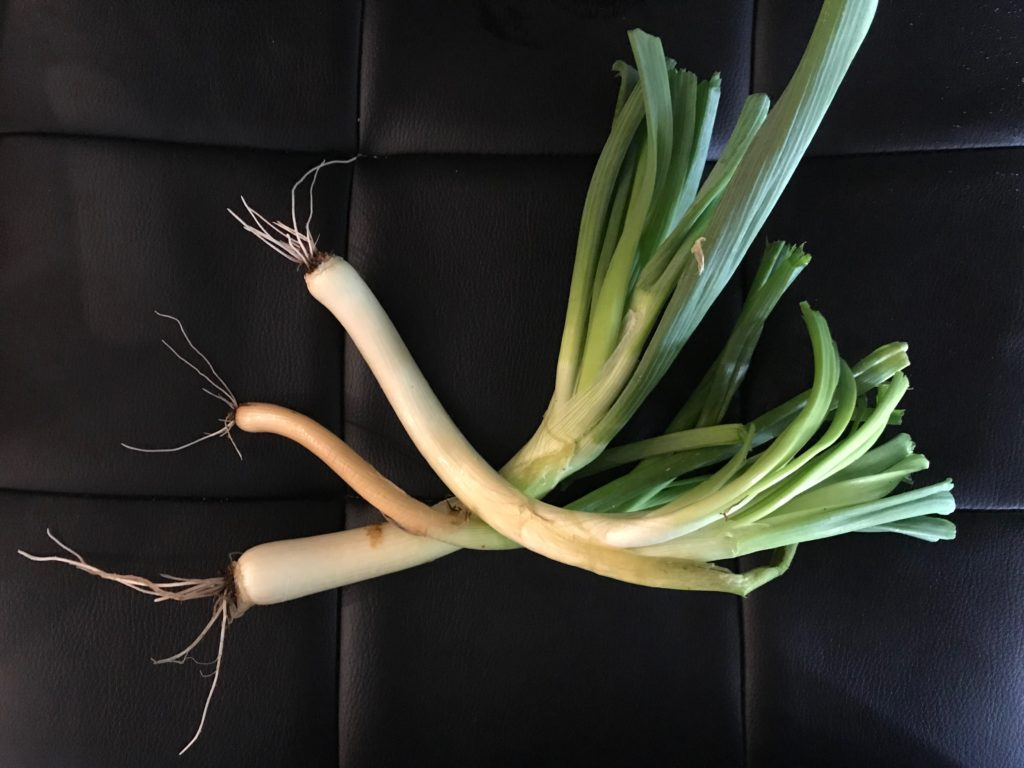 Three large scallions
