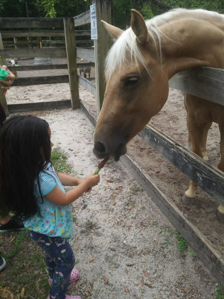 Child feeding a carrot to a horse