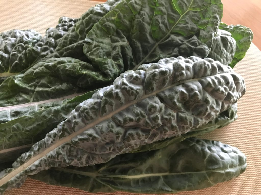 Leaves of lacinato(dinosaur) kale