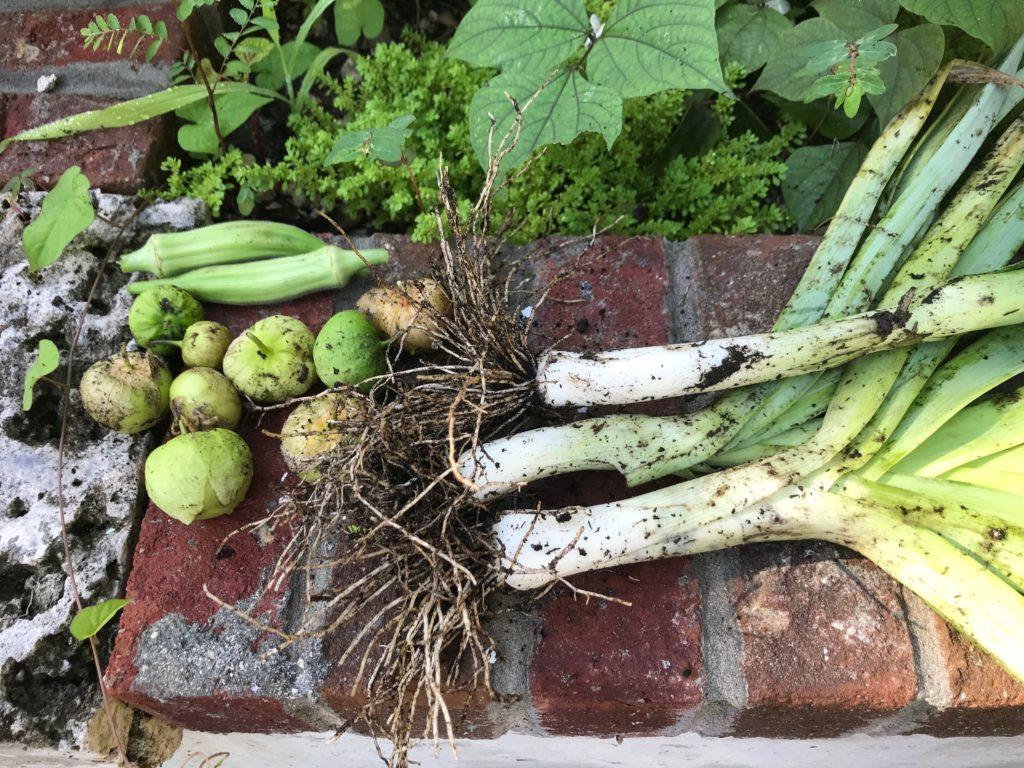 Harvested leeks with other veggies