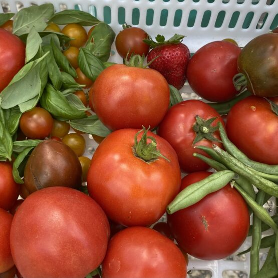 Basket featuring red tomatoes