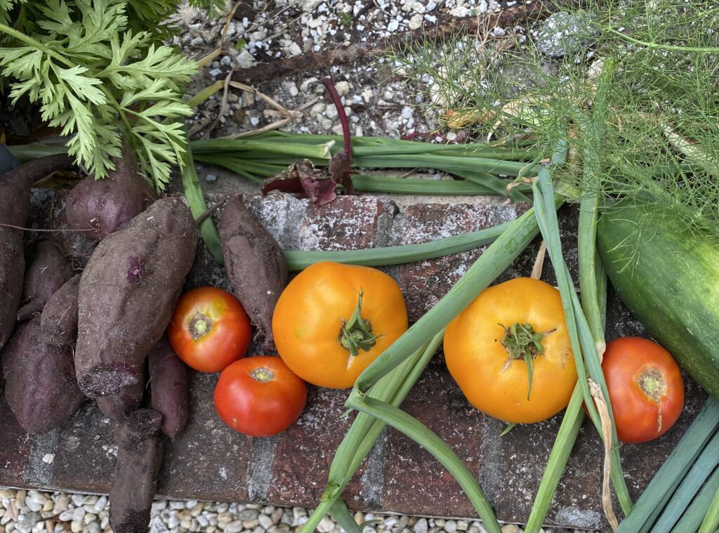 Golden and red tomatoes, purple sweet potatoes and scallions