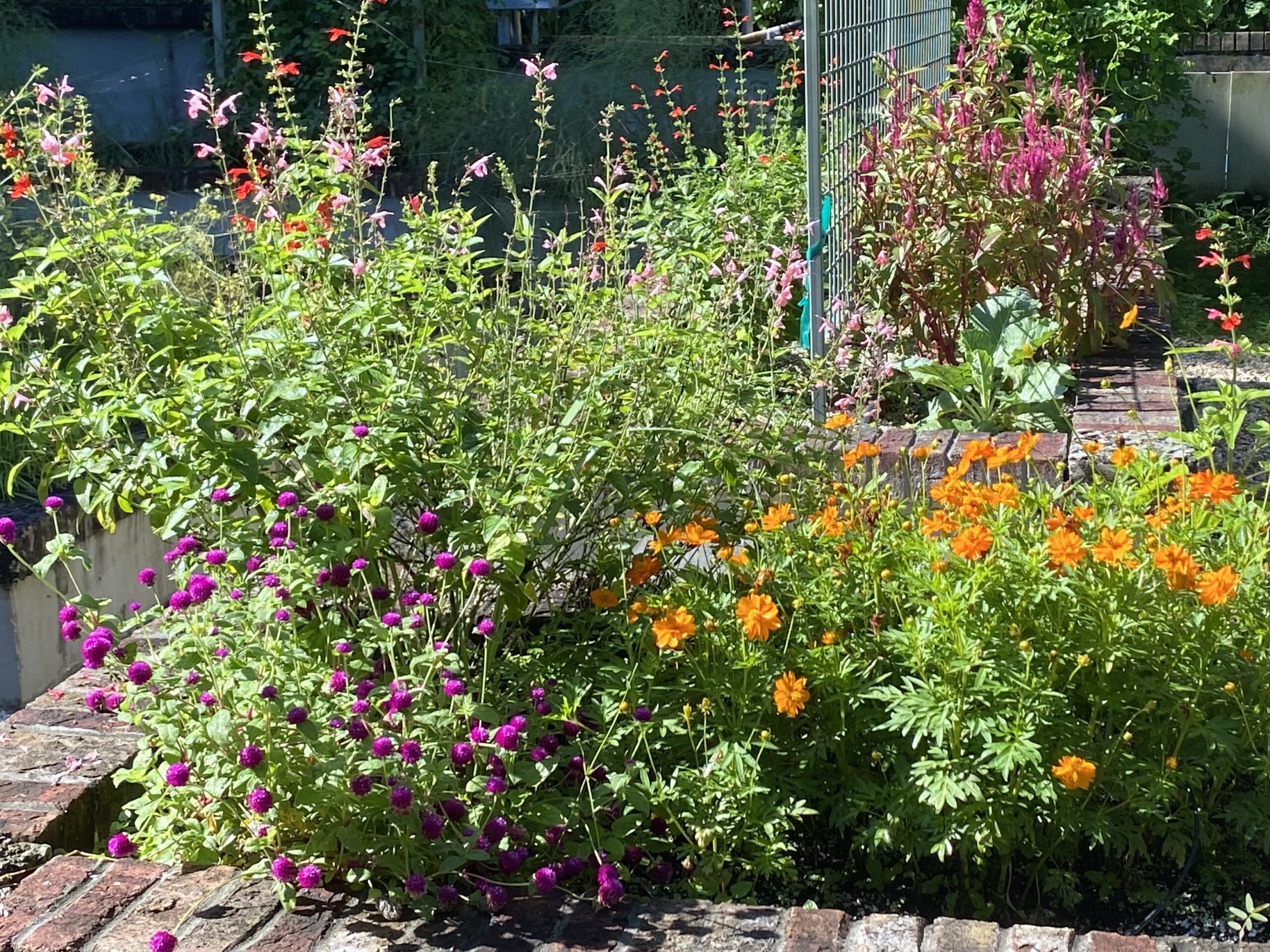 A variety of flowers in garden beds