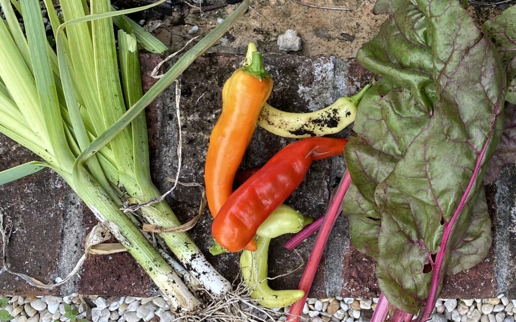 Long green, orange and red sweet peppers, leeks and chard leaves